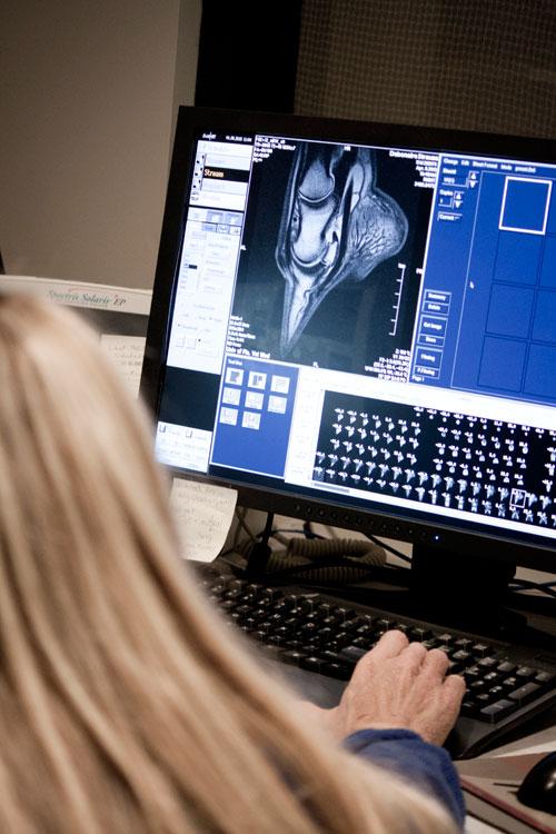 UF Eqine Lameness & Imaging MRI