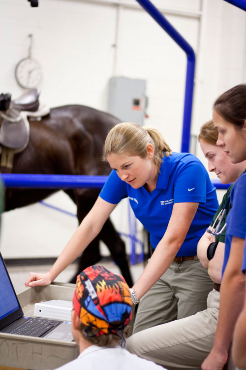 UF Equine Cardiology