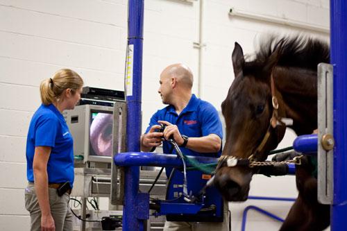 UF Equine Treadmill