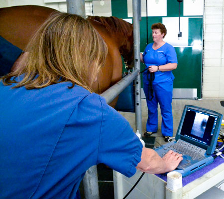 Breeding the Problem Mare » Large Animal Hospital » College