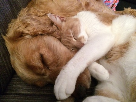 Sleeping Dog & Cat