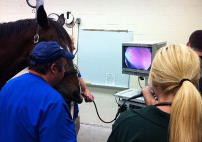 Standing Endoscopy at UF Large Animal Hospital
