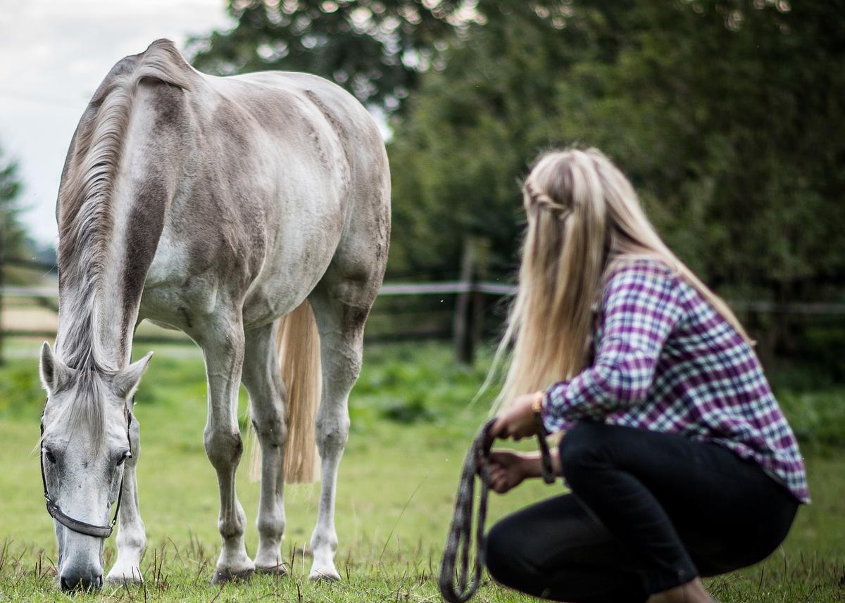 Horse & Girl